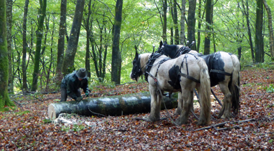 Horselogging in Vention Wood